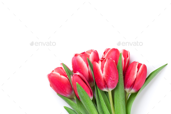 Red tulip flowers - Stock Photo - Images