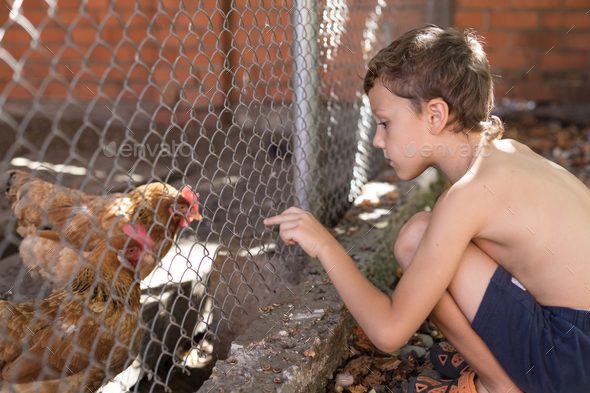 Little boy with farm chickens - Stock Photo - Images