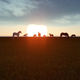 Horses in Sunset - VideoHive Item for Sale