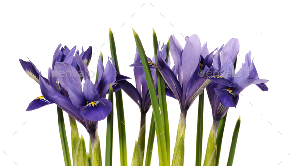 spring flowers - Stock Photo - Images