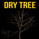Looping Dry Tree - VideoHive Item for Sale