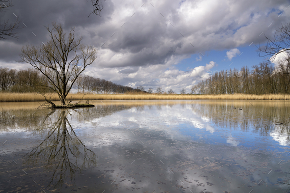 Nature reserve near Dordrecht - Stock Photo - Images