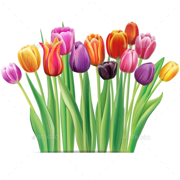 Bouquet of Multicolor Tulips - Flowers & Plants Nature