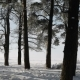 Snow-covered Bay with Wood - VideoHive Item for Sale