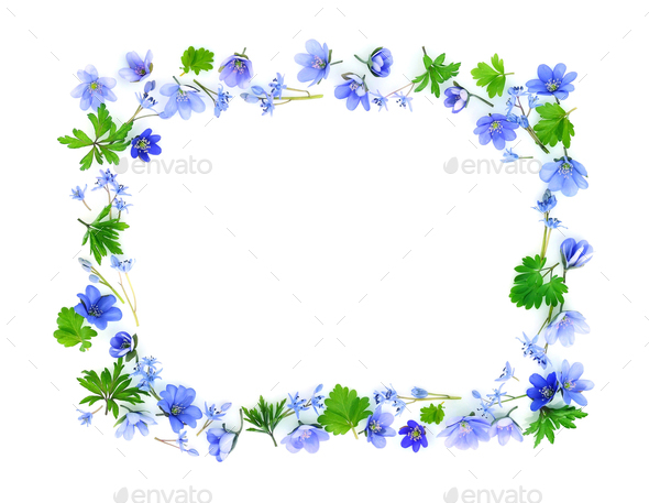 Floral rectangle made of blue spring flowers on white background - Stock Photo - Images