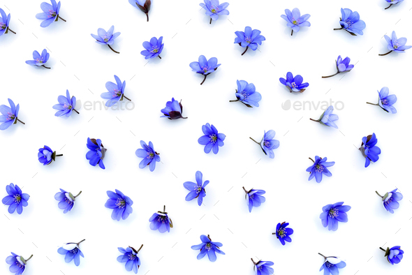 Floral pattern made of blue spring flowers (Hepatica nobilis) on - Stock Photo - Images