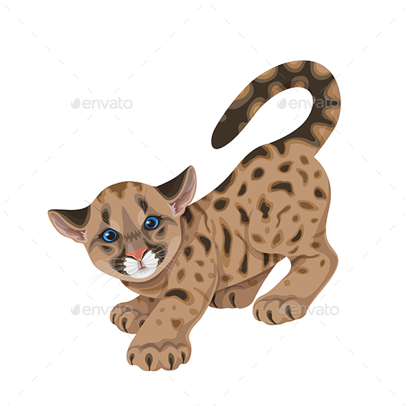 Cougar Cub in Motion Isolated - Animals Characters