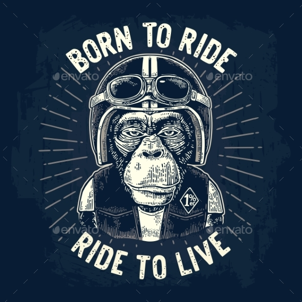 Monkey in the Motorcycle Helmet and Glasses - Animals Characters
