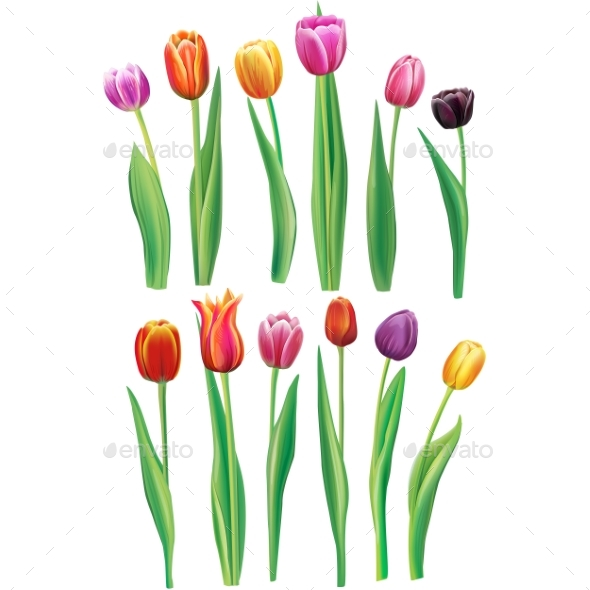 Realistic Multicolor Tulips Set - Flowers & Plants Nature