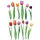 Realistic Multicolor Tulips Set - GraphicRiver Item for Sale