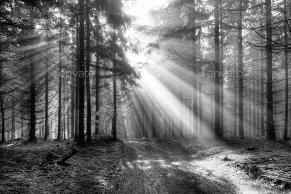 Sun rays over a forest path - Stock Photo - Images