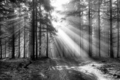 Sun rays over a forest path - PhotoDune Item for Sale