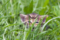 Small kitten in the grass - PhotoDune Item for Sale