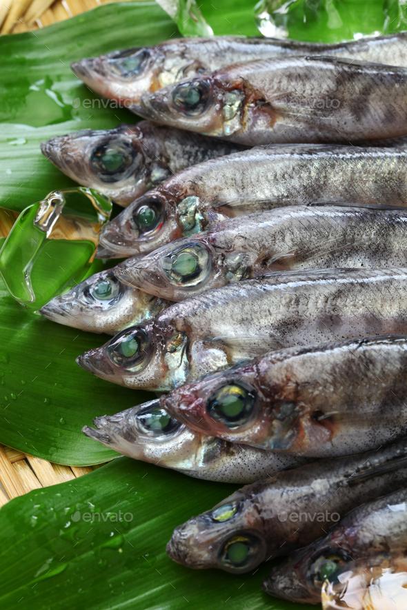 japanese green eyes fish, Mehikari - Stock Photo - Images