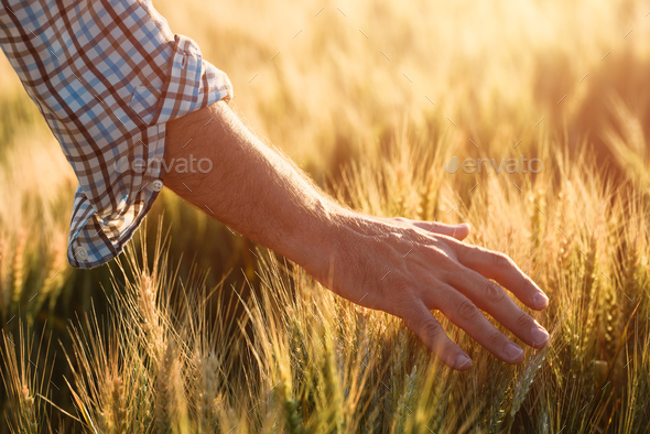 Taking care of crops - Stock Photo - Images