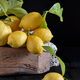Still Life With Lemons - PhotoDune Item for Sale