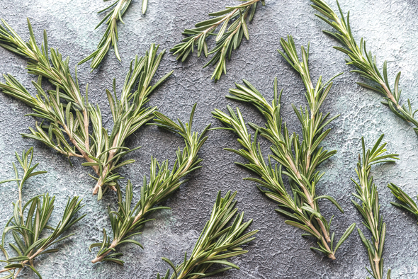 Fresh rosemary on navy background - Stock Photo - Images