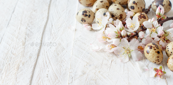 Quail eggs and almond flowers - Stock Photo - Images