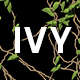 Ivy Growing - VideoHive Item for Sale