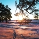 Winter Coniferous Forest in the Sun at Sunset - VideoHive Item for Sale