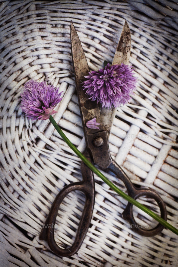 Chives in basket - Stock Photo - Images