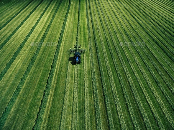 Blue tractor mowing green field, aerial view - Stock Photo - Images