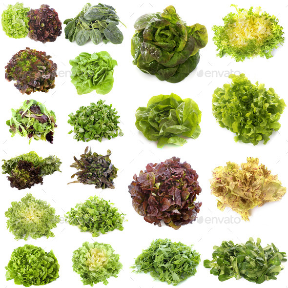 varieties of salads - Stock Photo - Images
