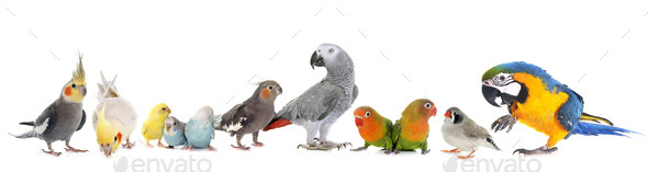 group of birds - Stock Photo - Images