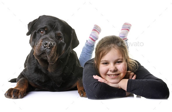 young girl and dog - Stock Photo - Images