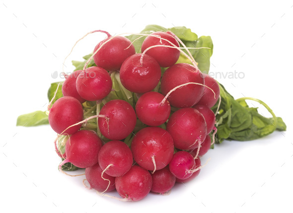 radish in studio - Stock Photo - Images