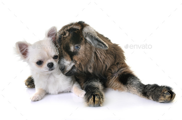 kid and puppy - Stock Photo - Images
