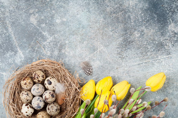 Quails eggs in nest and pussy willow. Easter greeting card - Stock Photo - Images