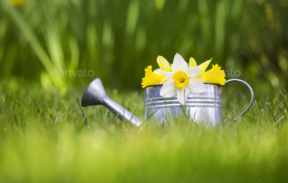 Easter and gardening concept - Stock Photo - Images