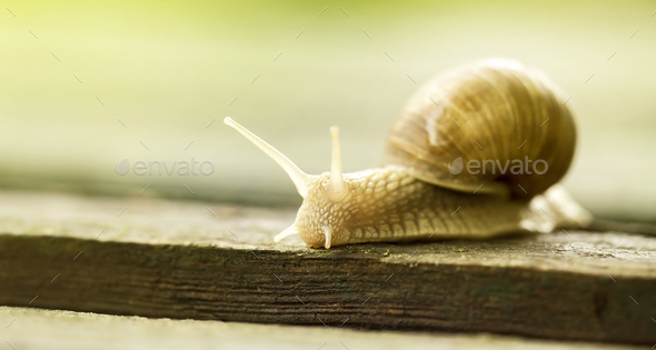 Slimy slow snail - Stock Photo - Images