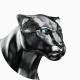 jaguarcs-studio