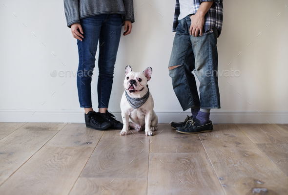 Asian couple with French bulldog - Stock Photo - Images
