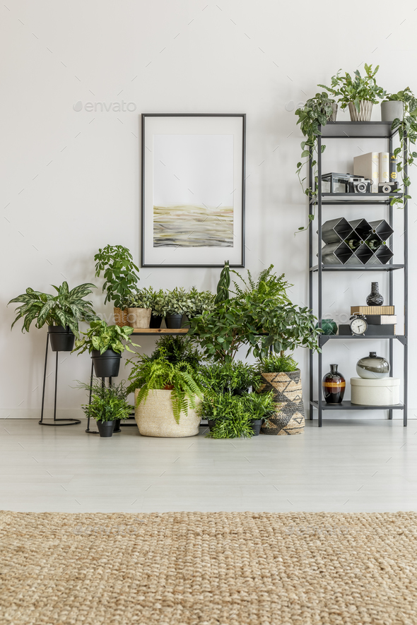 Bright room filled with plants - Stock Photo - Images