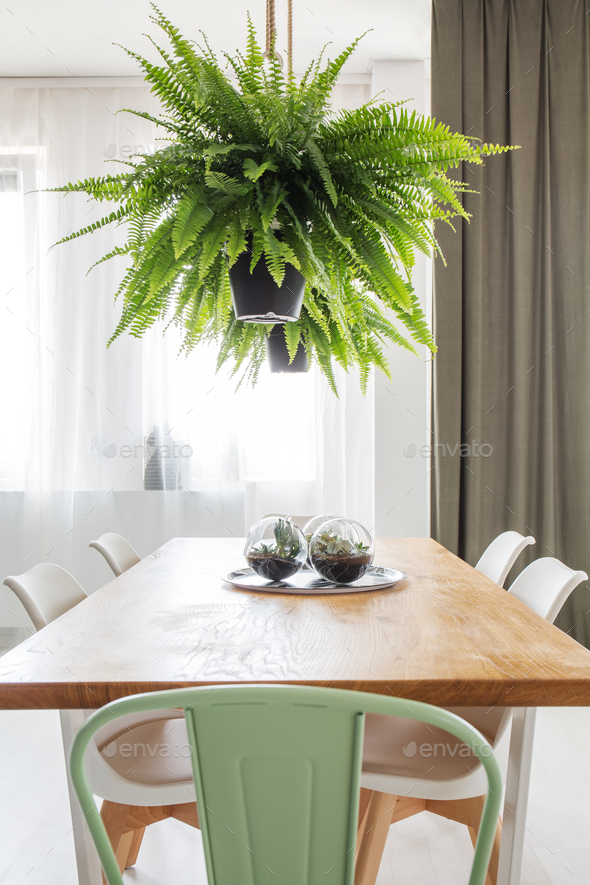 Fern in bright dining room - Stock Photo - Images