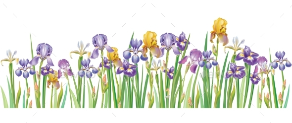 Border with Multicolor Vector Irises - Flowers & Plants Nature