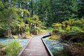Whakarewarewa Forest Acidic Pools Rotorua - PhotoDune Item for Sale