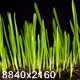 Growth of Fresh New Green Grass - VideoHive Item for Sale