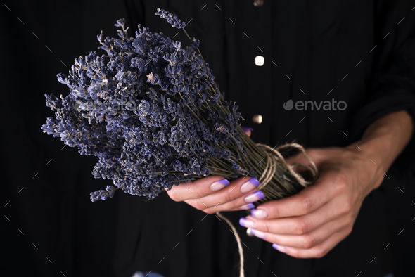 Female florist tying up fresh bouquet with lavender - Stock Photo - Images