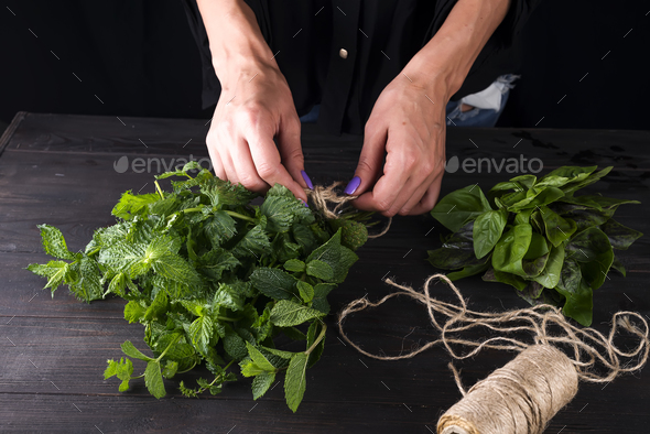 fresh grow bunch green organic mint leaf plant harvest in hand - Stock Photo - Images