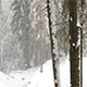 Heavy Snowfall in The Winter Forest - VideoHive Item for Sale