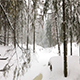 Landscape of Winter Forest - VideoHive Item for Sale