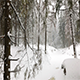 Panoramic View of Winter Forest - VideoHive Item for Sale