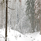 Snowfall in The Winter Forest - VideoHive Item for Sale