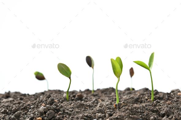 Plant,Tree - Stock Photo - Images