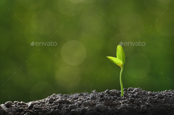 Plant,Tree - Stock Photo - Images