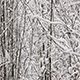 Trees Branches Covered With Snow - VideoHive Item for Sale
